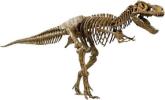Trex Fossil